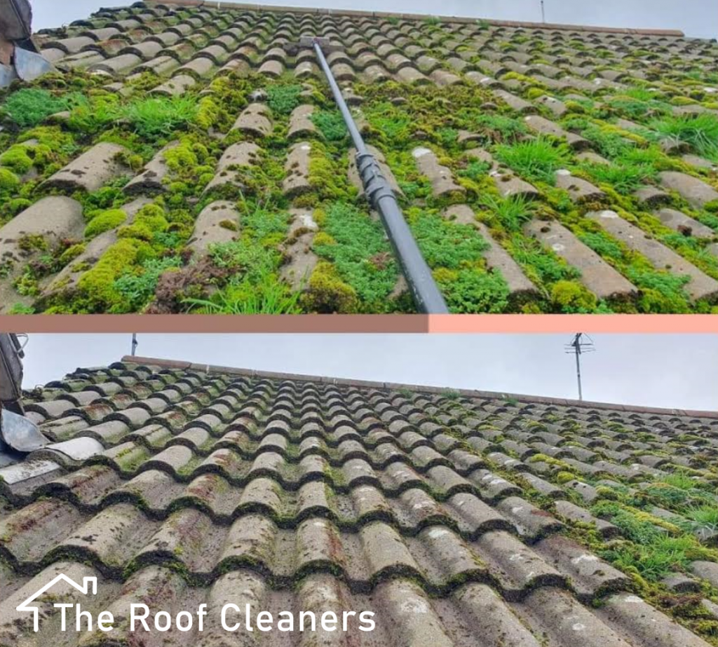 Roof moss removal London
